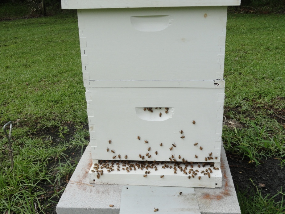 beehive_zpsc3983287